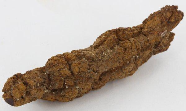 140ct Crystalized Coprolite Dinosaur Doo Cluster