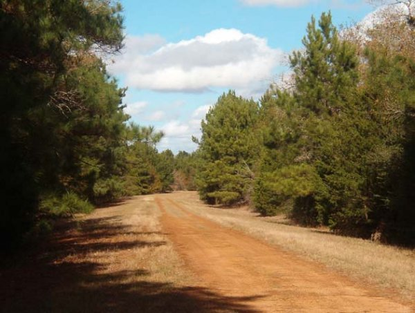 8: 10 LOT AUCTION EASTERN TEXAS AREA LOTS