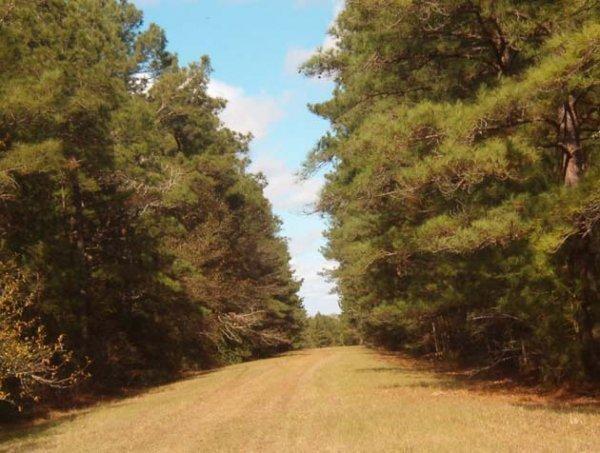13C: EASTERN TEXAS AREA, TREED LOT,UTILITIES, NEAR LAK