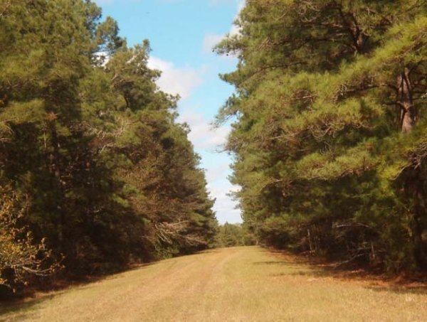 13C: EASTERN TEXAS AREA, TREED LOT,UTILITIES, NEAR