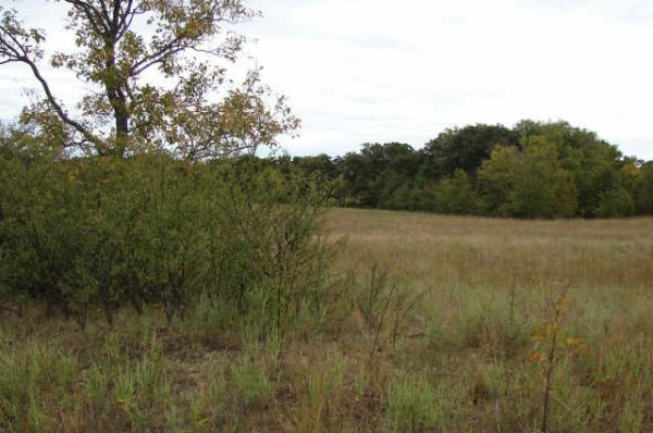 Partly wooded 20-acre parcel in scenic E. Oklahoma!