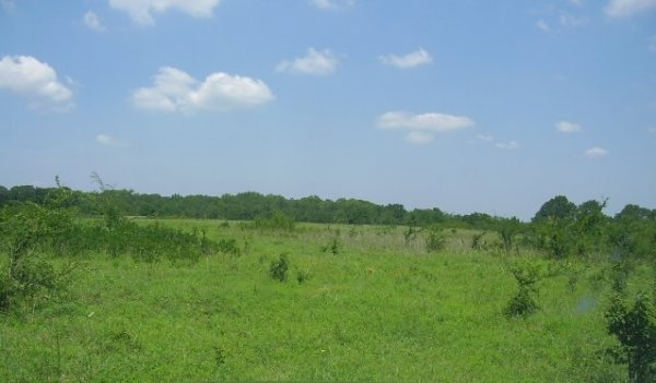 Level and partly wooded 20-acre parcel in E. Oklahoma!