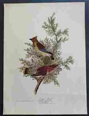 John James Audubon Cedar Bird print