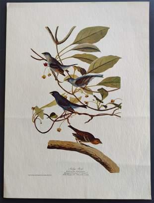 John James Audubon Indigo Bird print