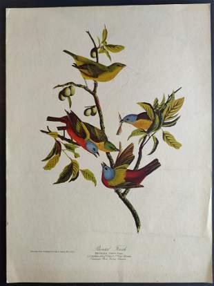 John James Audubon Painted Finch print