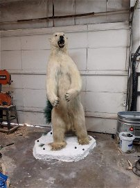 LIFESIZE STANDING POLAR BEAR ON BASE *US RES ONLY*