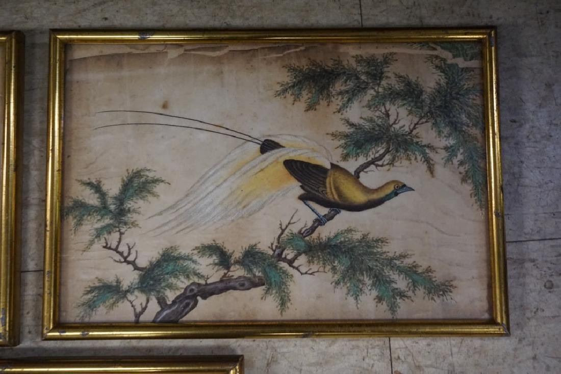 (3) EARLY ASIAN (?) PAINTINGS OF BIRDS ON RICE PAPER, - 3