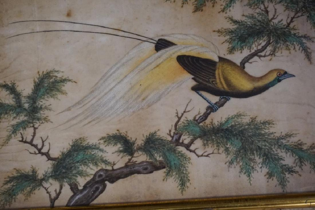 (3) EARLY ASIAN (?) PAINTINGS OF BIRDS ON RICE PAPER, - 6