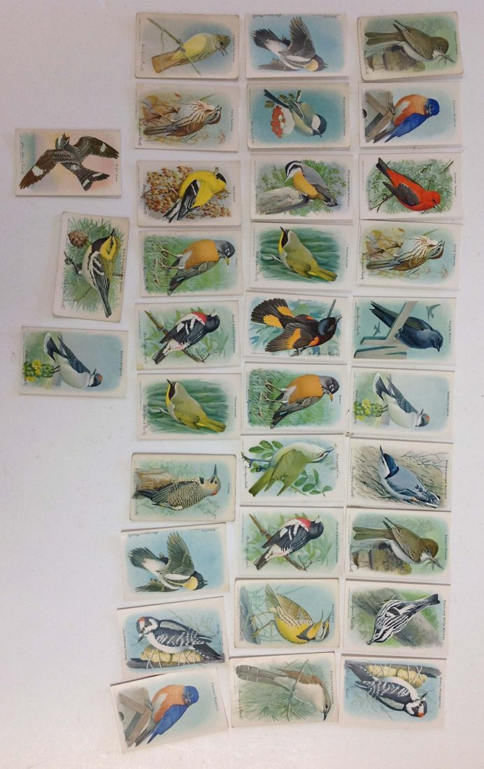 33 Church and Dwight Useful Birds of America cards