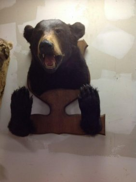 Black Bear Taxidermy Mount With Paws