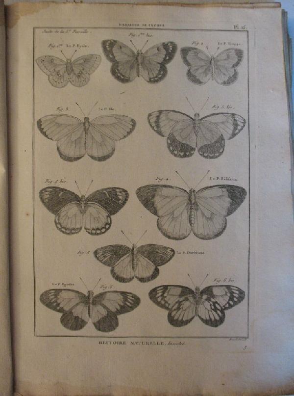 3: [BÉNARD, DIREXIT ] - [Histoire naturelle, Insectes].