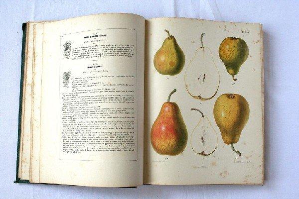 4: BERGHUIS, S.  - De Nederlandsche boomgaard. Tweede d