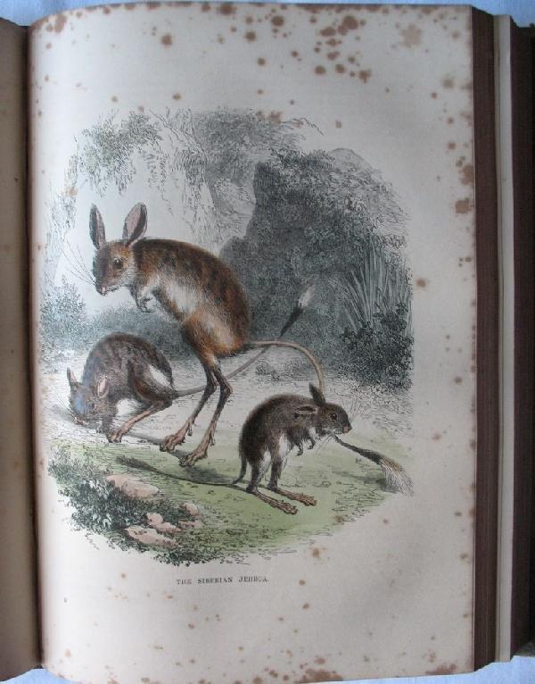 9: Cassell's Popular Natural History. I - [IV].