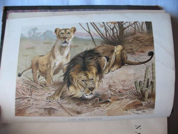 24: LYDEKKER, Richard  - The Royal Natural History. Wit