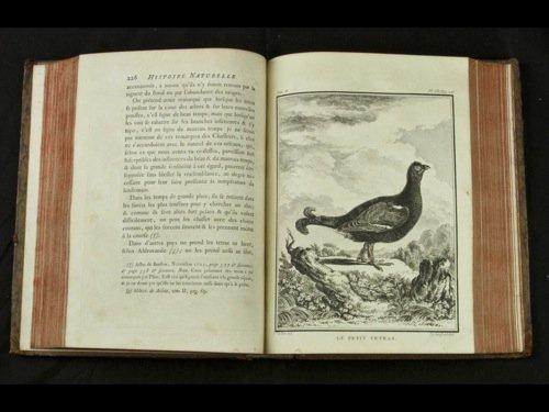 397: Georges Leclerc, comte de BUFFON - Histoire nature