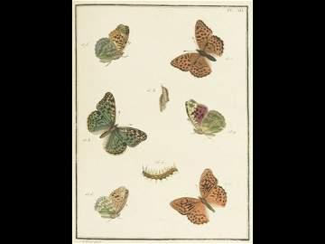 Jean-Jacques ERNST - Papillons d'Europe peints d'APRÈS