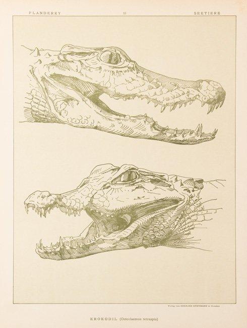 [ANIMAUX] Paul FLANDERKY - Seetiere. Naturstudien für