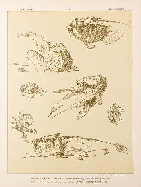 [ANIMAUX] Paul FLANDERKY - Seetiere. Naturstudien für - 3