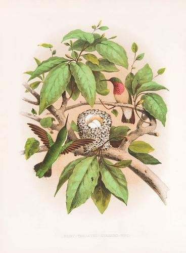 23C: GENTRY, Thomas (1843-1905). Nests and Eggs of Bird
