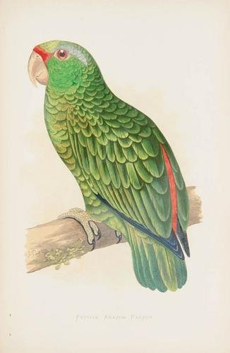 24C: GREENE, William Thomas (d.1906) Parrots in captivi