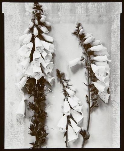 76F: Olivia Parker- Two Still Life Images