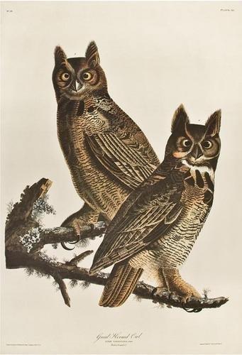 10: AUDUBON, John James (1785-1851). Great Horned Owl.