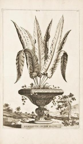 17: MUNTING, Abraham (1626-1683).  Phytographia Curios