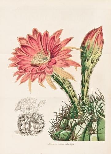 22: LEMAIRE, Charles. Le Jardin Fleuriste,  Journal Gé