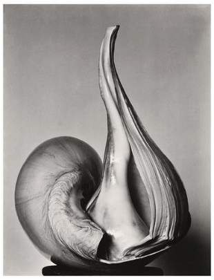 4: Edward Weston (1886-1958) and Brett Weston (1911-1
