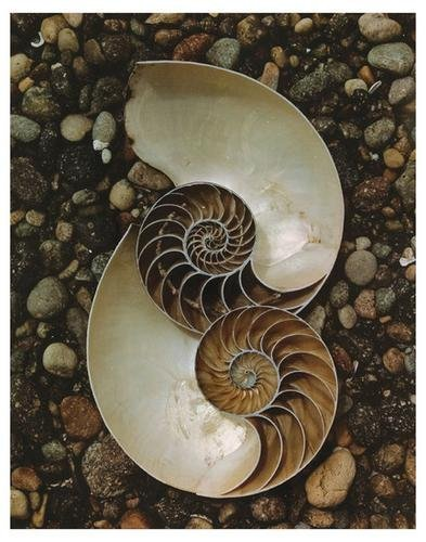 21: Edward Weston (1886-1958) Nautilus shells, 1947