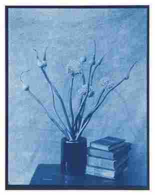 John Dugdale (b. 1960) Allium Flowers, Stone Ridge