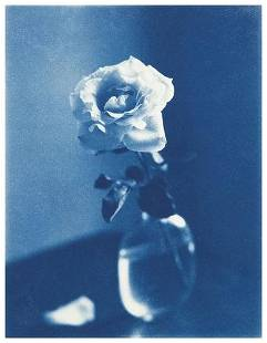 John Dugdale (b. 1960) Garden Rose, Stone Ridge, 1