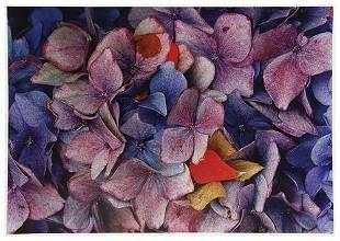 Ernst Haas (1921-1986) Hydrangeas, California, 198
