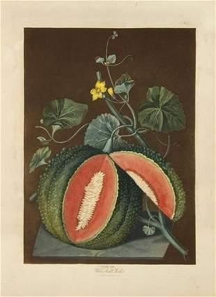 BROOKSHAW, George (1751 - 1823). Pomona Britannic