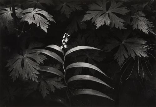 14: Bruce Barnbaum (b. 1943) Selected images from imag