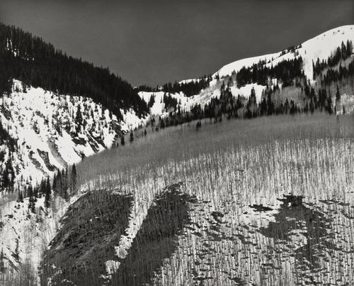24: Robert K. Byers (b. 1918) Bare Aspens near Silvert