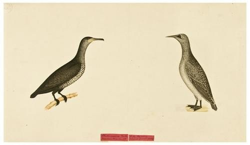 6: BIRD ALBUM. [After Edward Donovan] Album of Britis