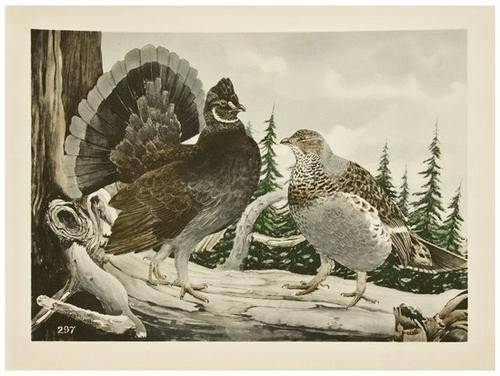 12: BRASHER, Rex (1869-1960) Birds and Trees of North