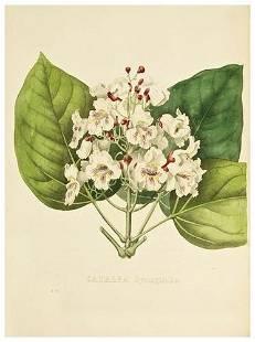 51: [GEEL, Pierre Corneille van (1796-1838)]. Encyclog