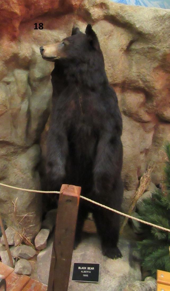 BLACK BEAR, FULL MOUNT