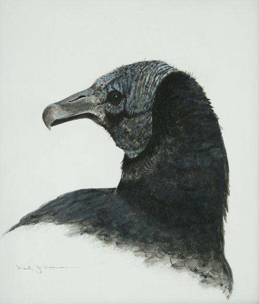 15: Karl J. Kuerner, Black Vulture