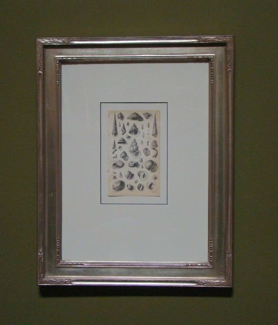 "104: Antique Seashell ""Manual of Mollusk"""