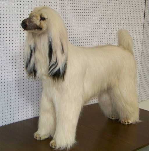 178 Life Size Avanti Afghan Hound Dog Stuffed Animal