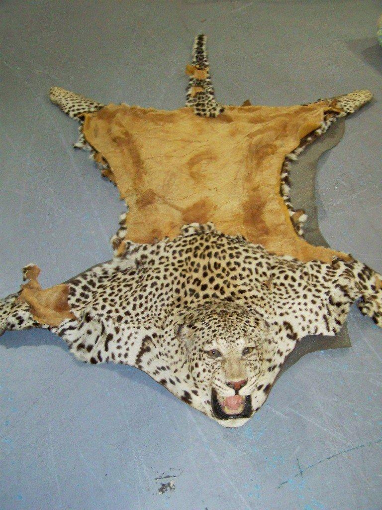 193B: Great Early Cheetah Skin Rug - 2