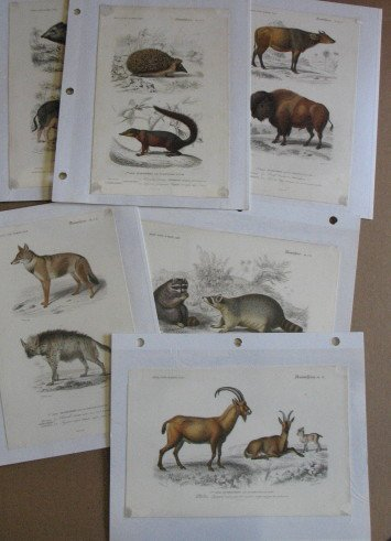 1087: 19th Century Animal Prints