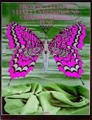 Iron Butterfly Iron Butterfly Avalon Ballroom concert