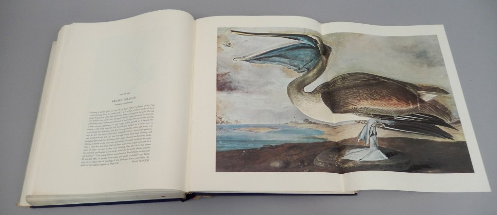 The Original Water-Color Paintings by John James - 7