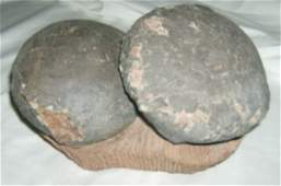 45: Pair of Museum Quality Dinosaur Double Eggs