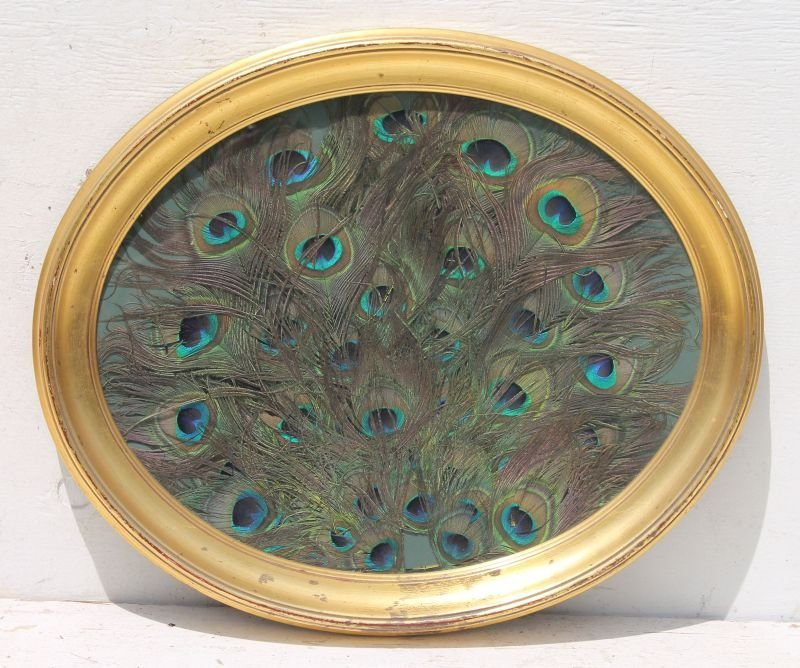 """nicely framed peacock feather display - 19 1/2"""" x 23"""""""