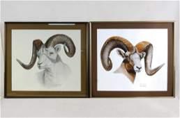 George Pitman & Geo. Otterman Horn sheep lithos -2